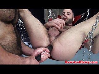 Hairy bear enjoys blowbang feast