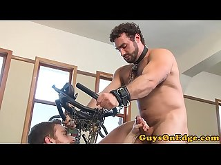 Tied up studs tuged till cumshots